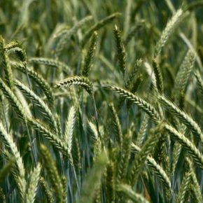 Landfall Grass Fall