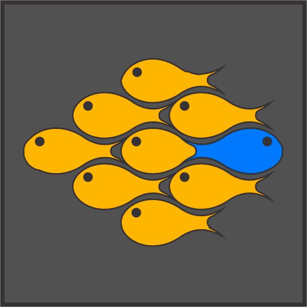 Bluefish Photo